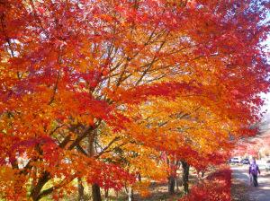 河口湖紅葉1